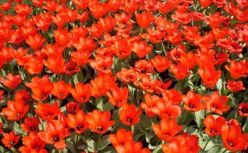 SEO аудит сайта цветочный магазин